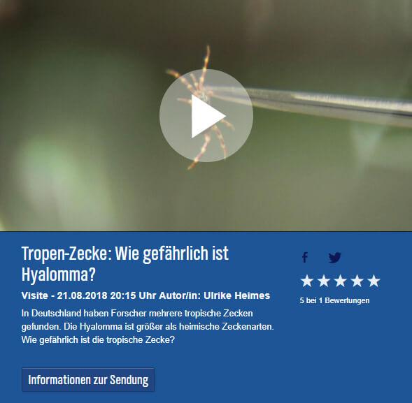 Tropen Zecke